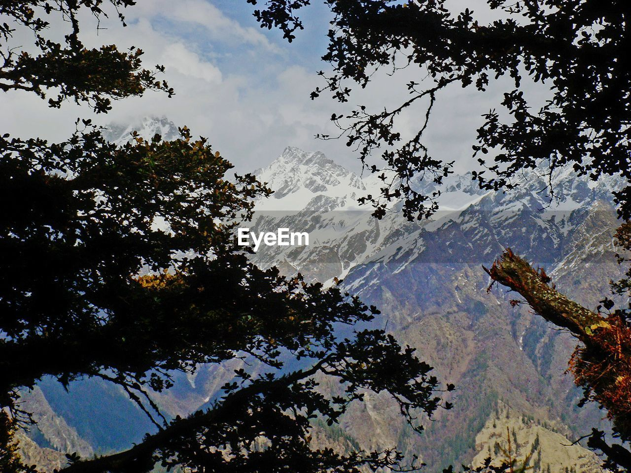 tree, mountain, beauty in nature, nature, low angle view, sky, scenics, no people, outdoors, day, branch, tranquility, snow, mountain range, high