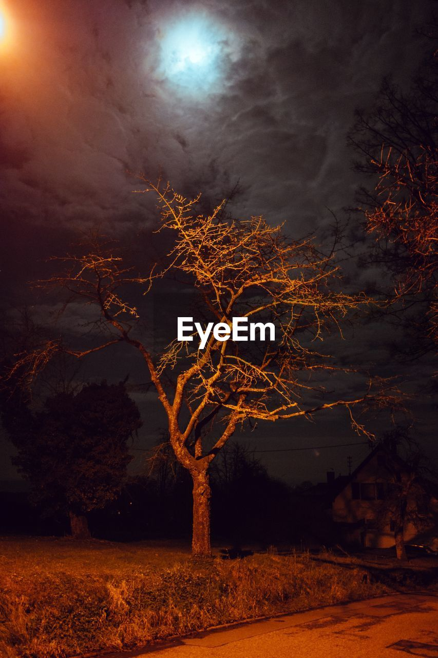 night, tree, bare tree, moon, tranquility, illuminated, moonlight, nature, sky, branch, outdoors, beauty in nature, no people