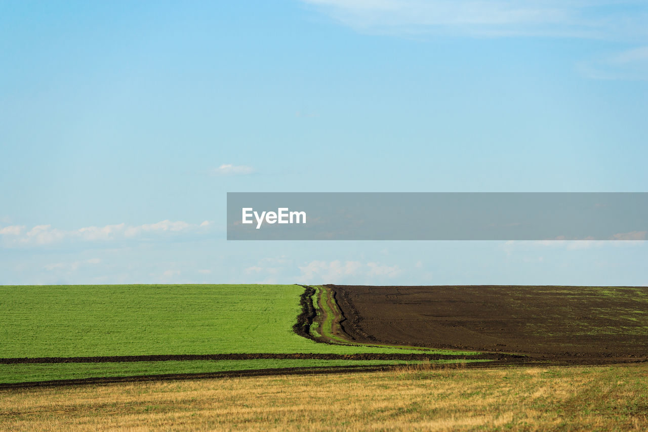 landscape, field, environment, land, sky, tranquil scene, tranquility, scenics - nature, beauty in nature, grass, plant, green color, nature, rural scene, cloud - sky, day, growth, horizon, agriculture, horizon over land, no people, outdoors