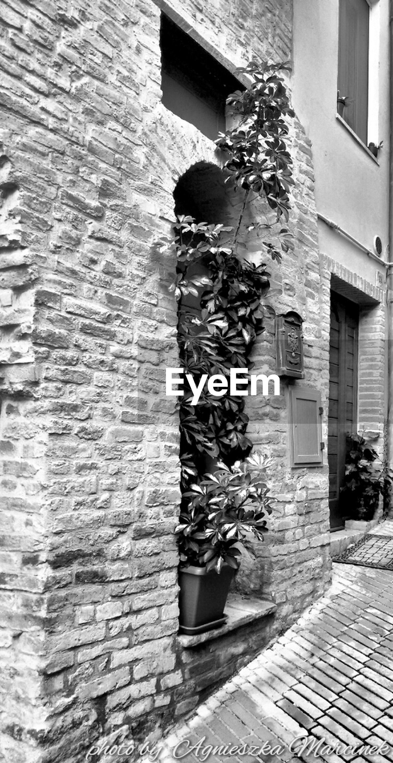 building exterior, architecture, built structure, window, potted plant, wall - building feature, house, plant, brick wall, flower, building, day, wall, residential building, sunlight, growth, outdoors, residential structure, no people, door