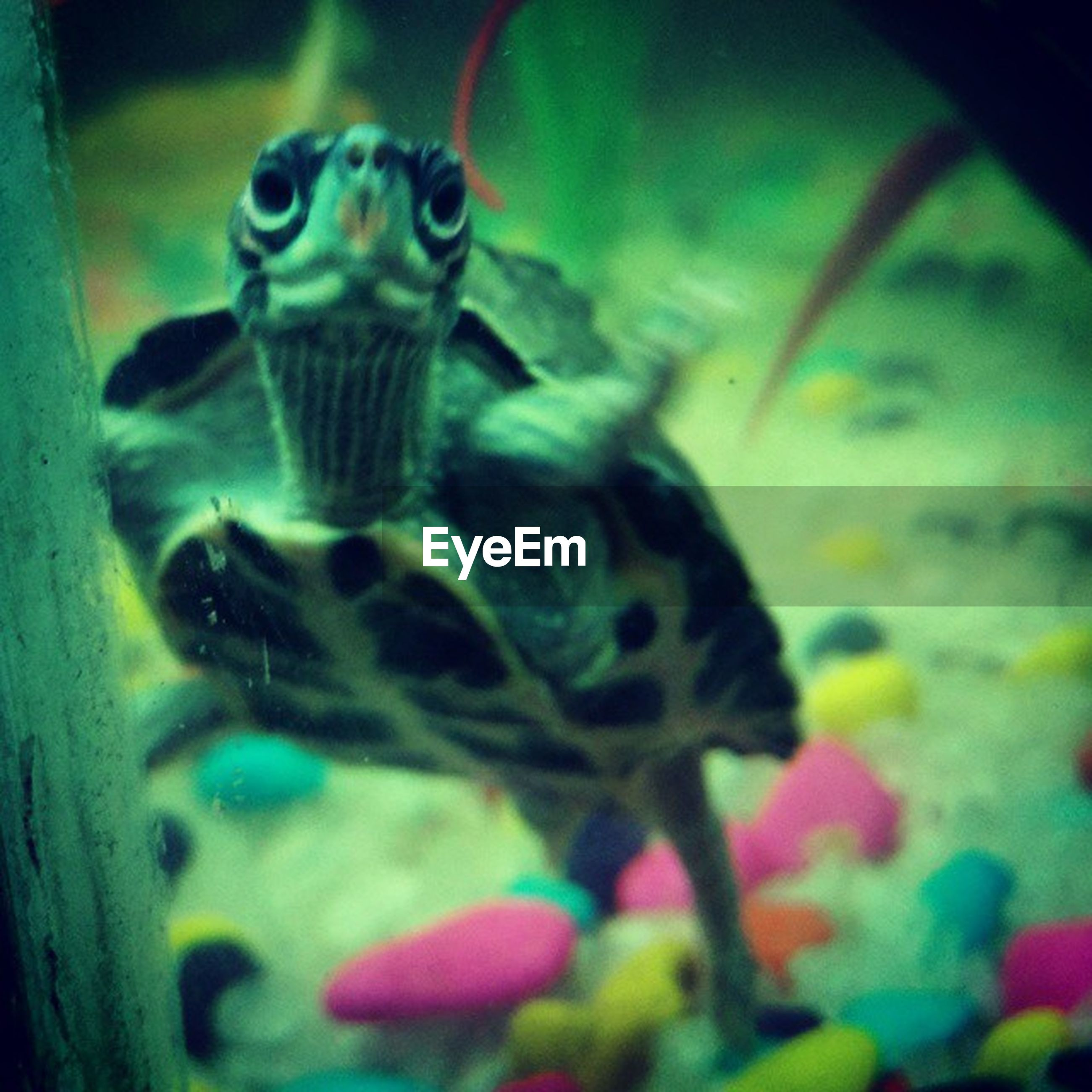 animal themes, one animal, animals in the wild, wildlife, close-up, animals in captivity, indoors, selective focus, focus on foreground, animal head, two animals, underwater, zoology, no people, animal wildlife, sea life, animal, insect, zoo, nature