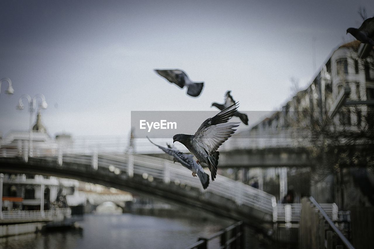 flying, vertebrate, bird, animal themes, spread wings, architecture, animal, animals in the wild, built structure, building exterior, water, animal wildlife, mid-air, bridge, sky, bridge - man made structure, nature, one animal, motion, no people, seagull, outdoors