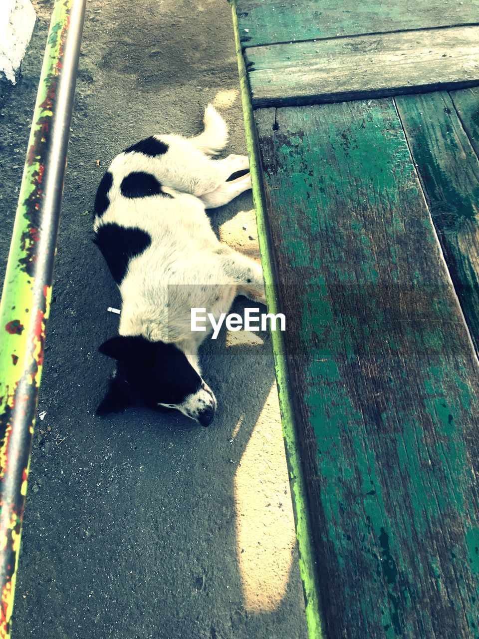 animal themes, one animal, domestic animals, mammal, high angle view, pets, day, dog, outdoors, no people, full length