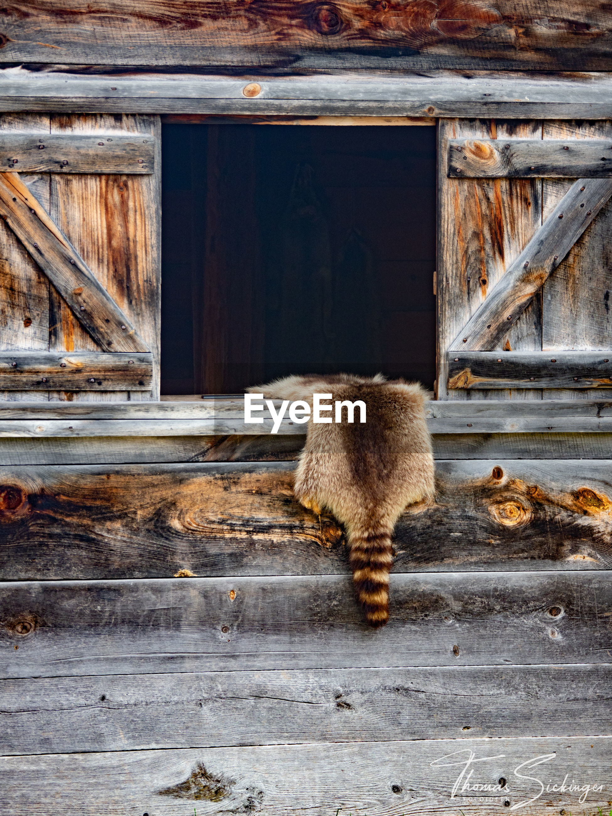 FULL LENGTH REAR VIEW OF A CAT ON WOOD