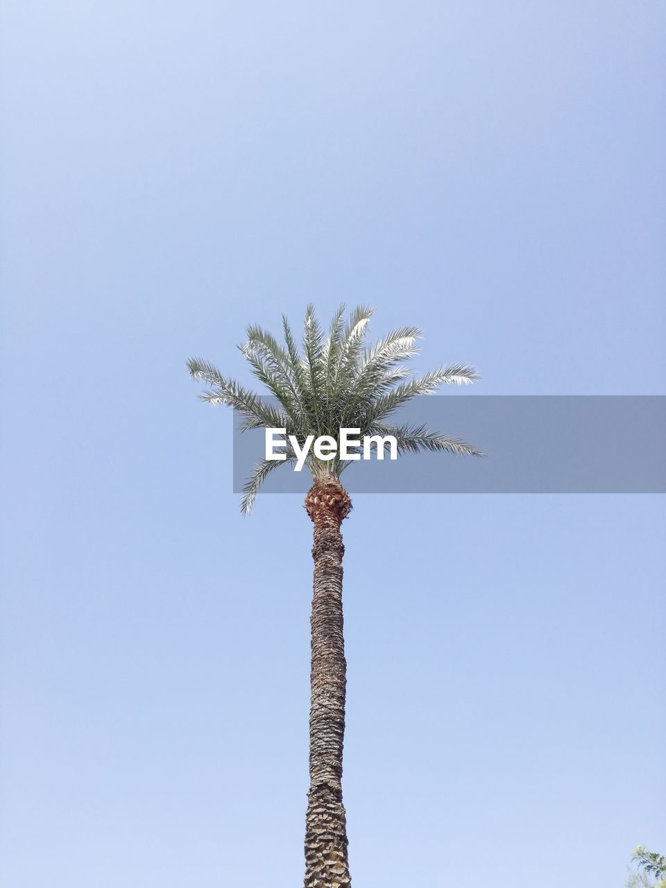 palm tree, clear sky, low angle view, growth, nature, day, tree, no people, outdoors, beauty in nature, sky