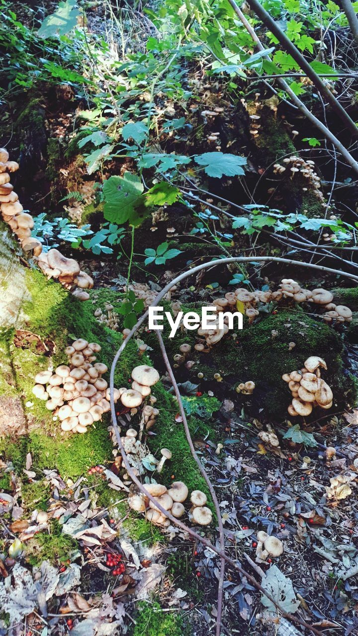 plant, land, growth, day, leaf, no people, nature, plant part, field, forest, tree, tranquility, outdoors, high angle view, dry, beauty in nature, mushroom, fungus, falling, close-up, messy, leaves