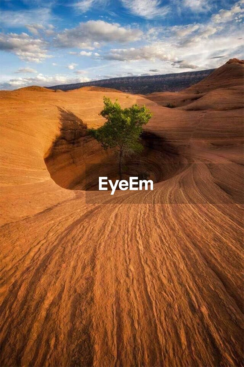 landscape, nature, cloud - sky, arid climate, brown, scenics, no people, sand dune, physical geography, outdoors, tree, desert, day, beauty in nature, sky