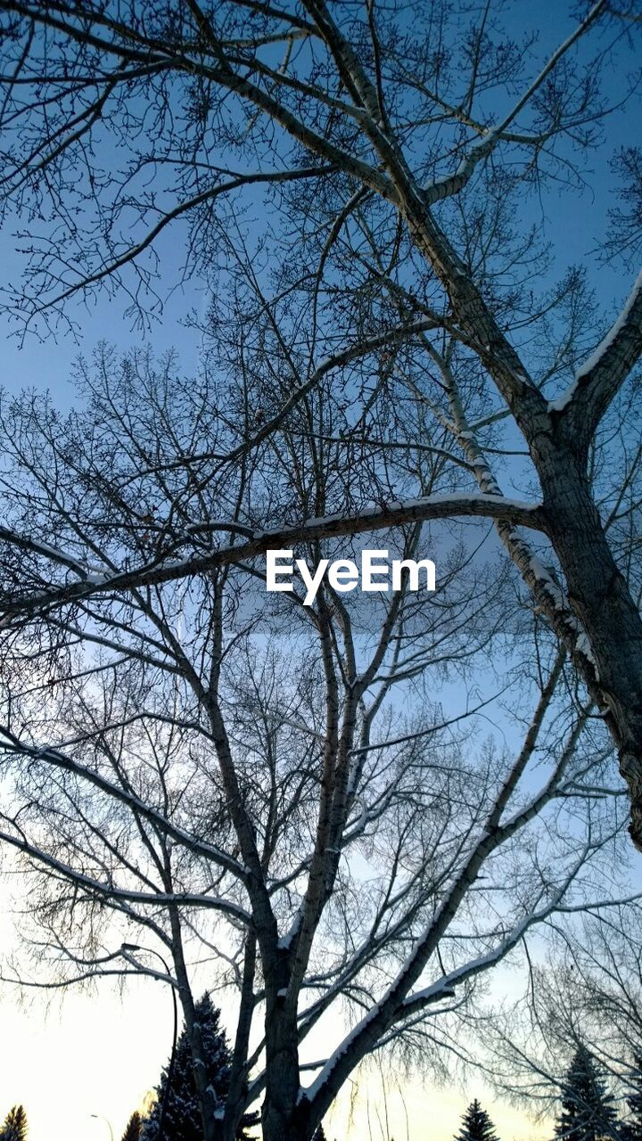 Low Angle View Of Bare Trees Against Clear Sky During Winter
