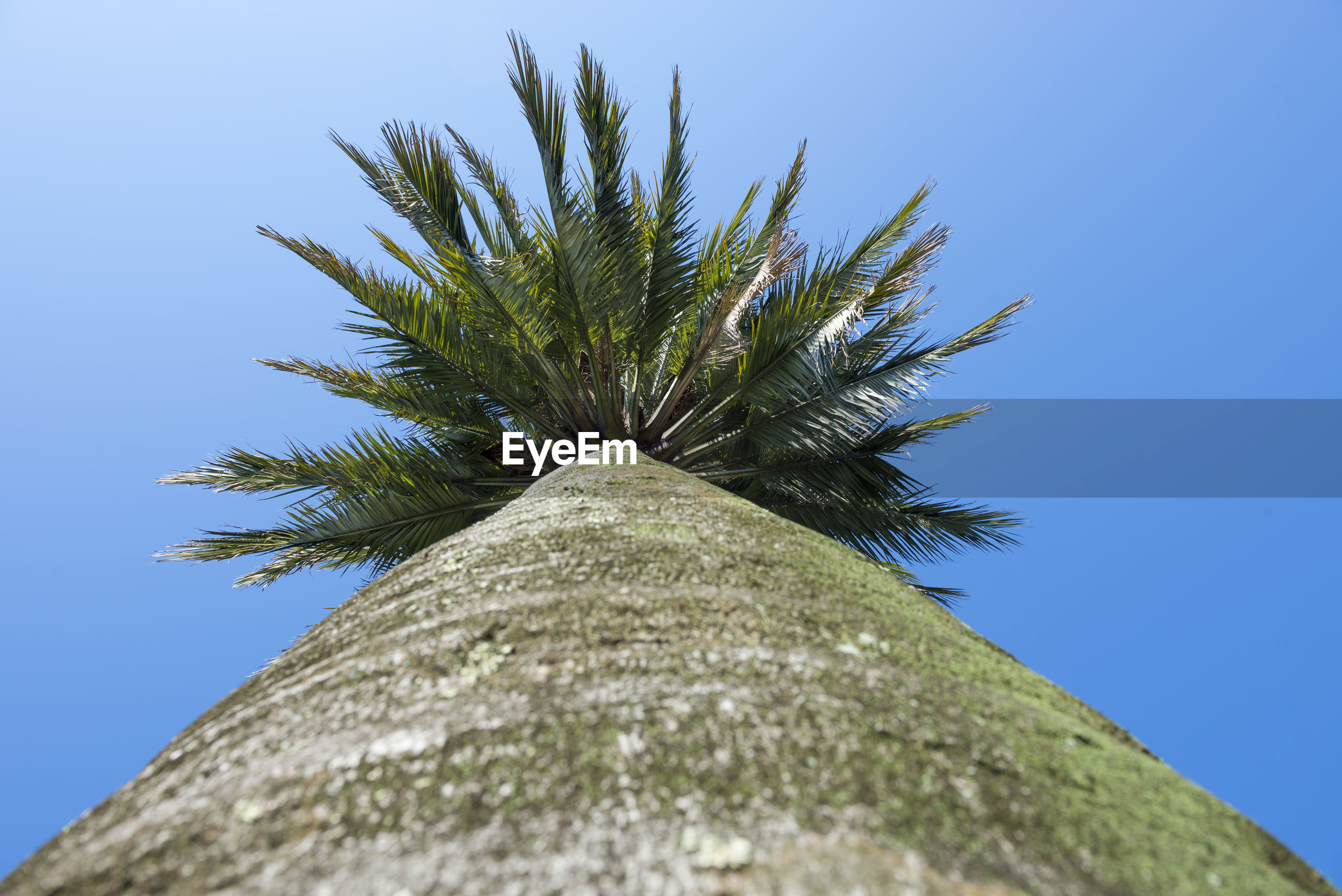 Directly below shot of palm tree against clear blue sky
