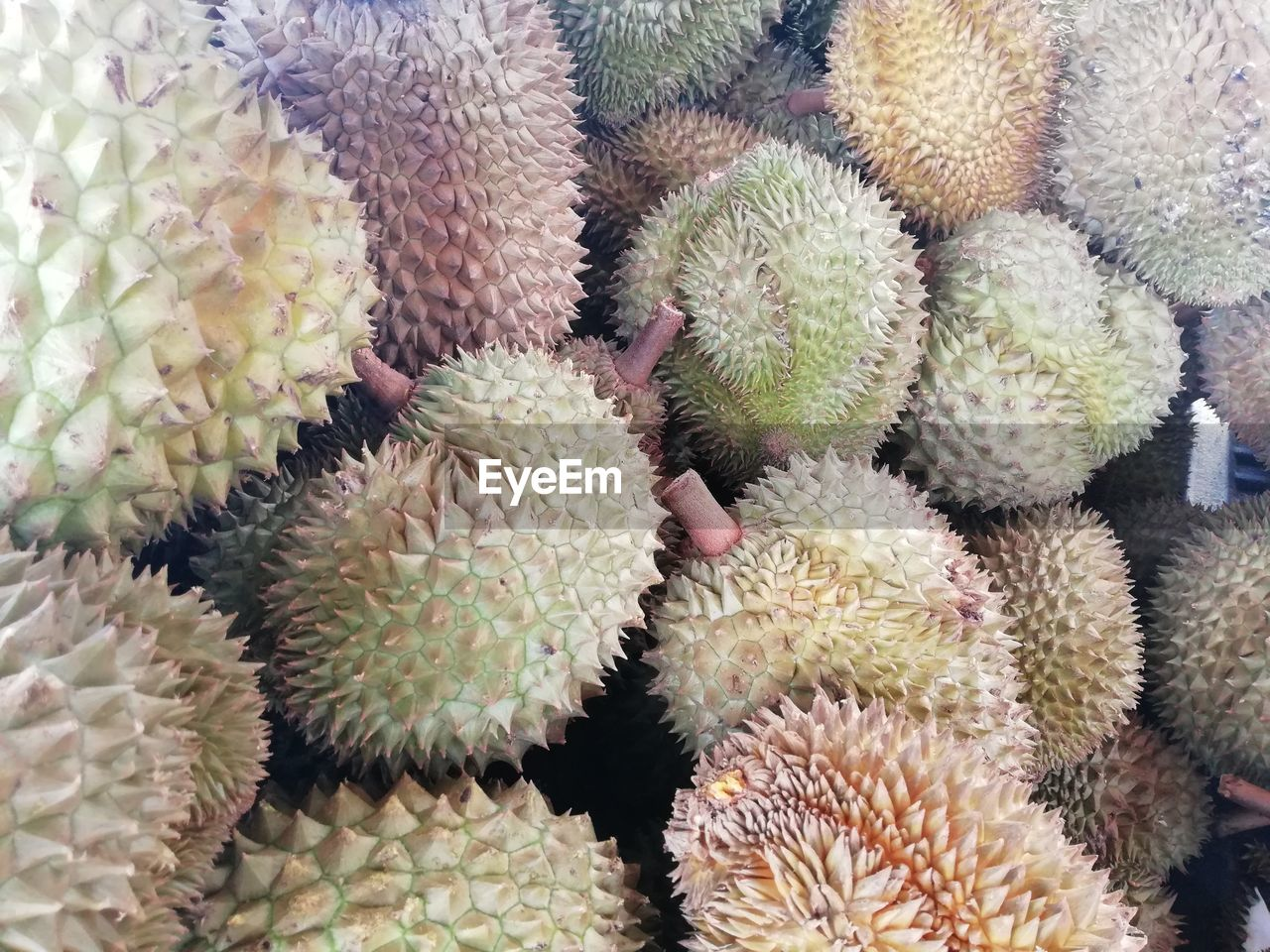 cactus, succulent plant, spiked, no people, growth, thorn, close-up, plant, green color, sharp, full frame, backgrounds, high angle view, day, freshness, large group of objects, barrel cactus, market, beauty in nature, abundance, retail display, spiky