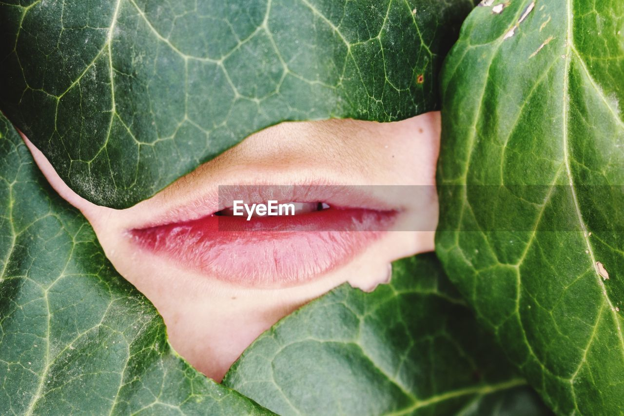 Close-up of woman lips by leaves