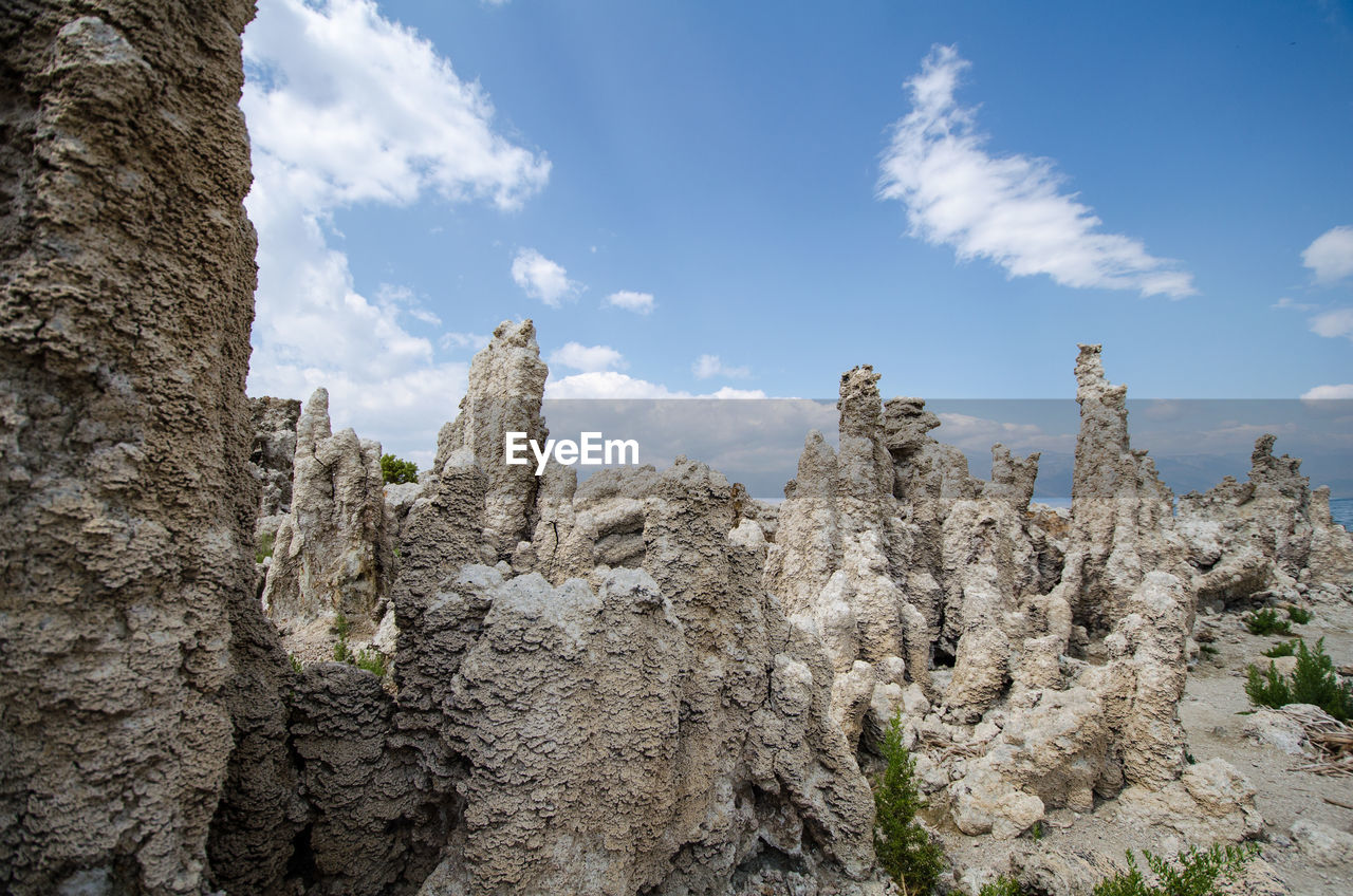 LOW ANGLE VIEW OF PLANTS AGAINST ROCK FORMATION