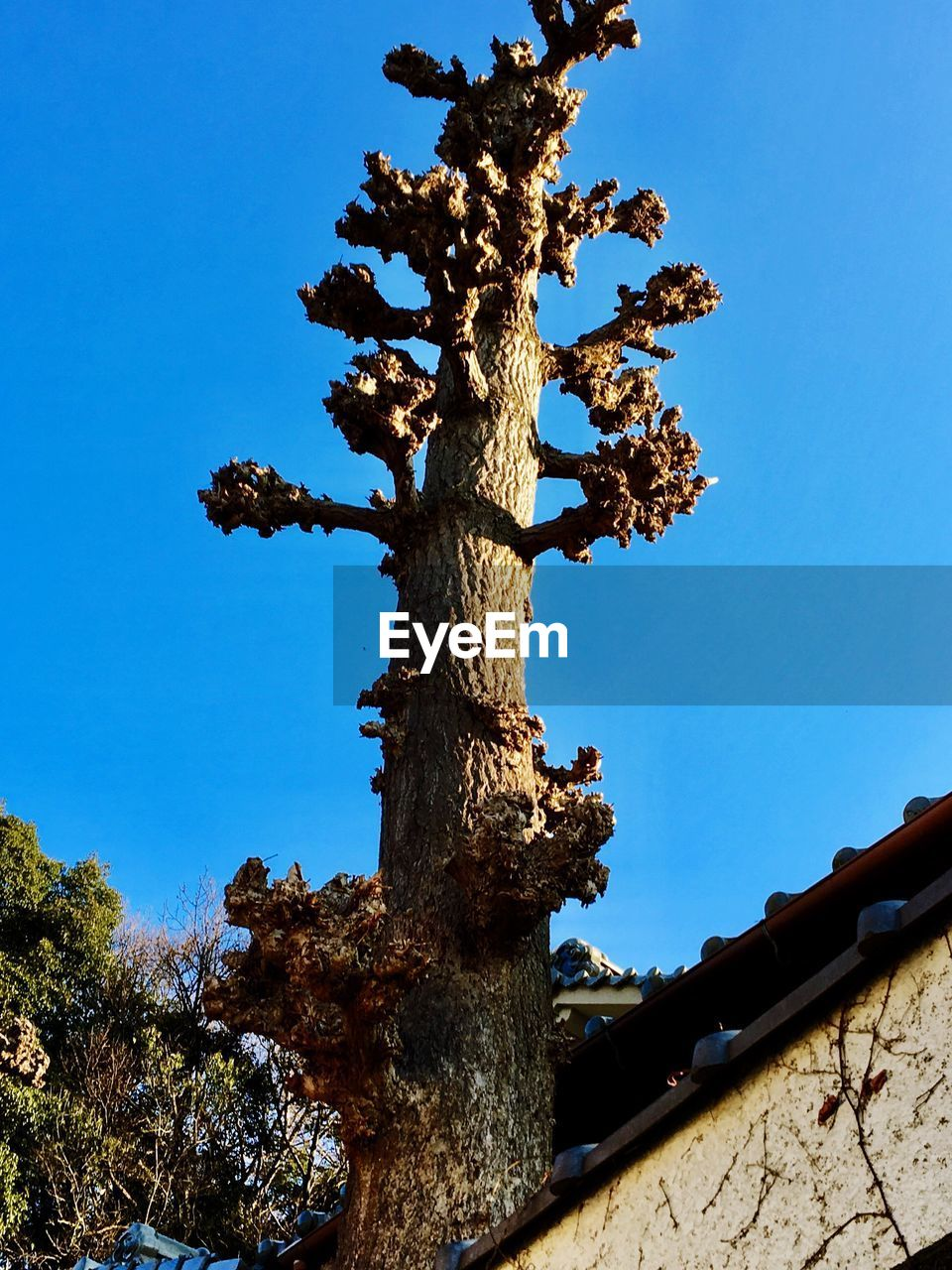 tree, tree trunk, low angle view, day, blue, outdoors, nature, no people, clear sky, growth, branch, beauty in nature, sky