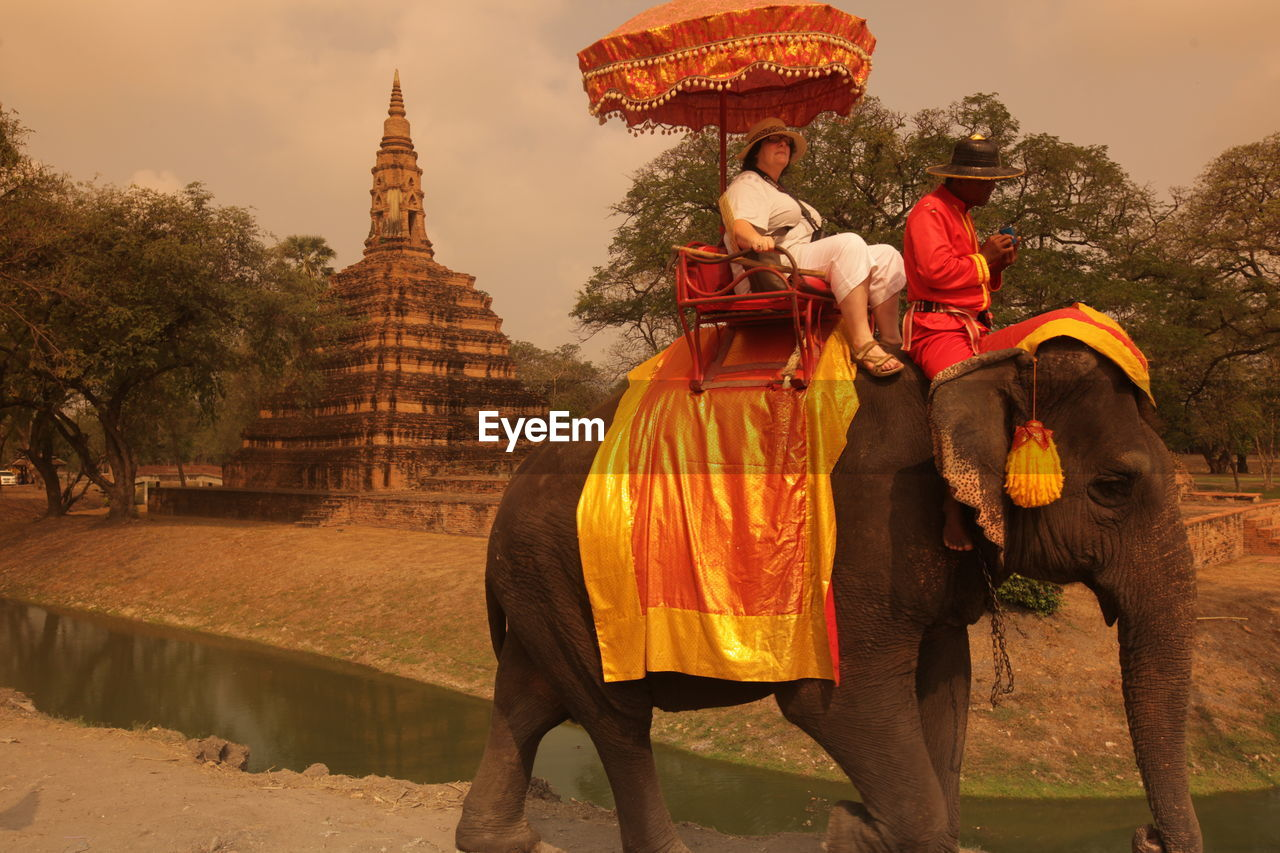 Tourist riding on elephant by old temple in ayutthaya kingdom
