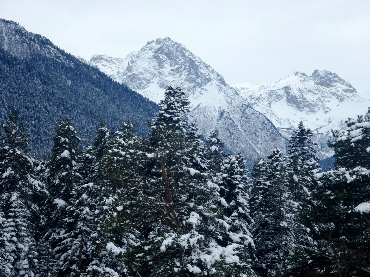 Low Angle View Of Snow Covered Trees And Mountains Against Sky