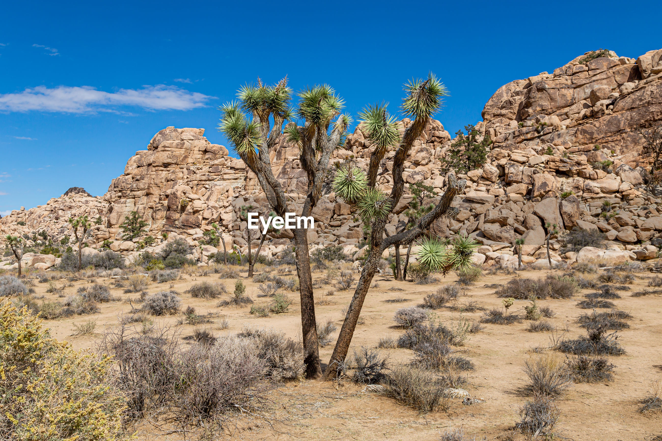 SCENIC VIEW OF ROCK FORMATIONS IN DESERT
