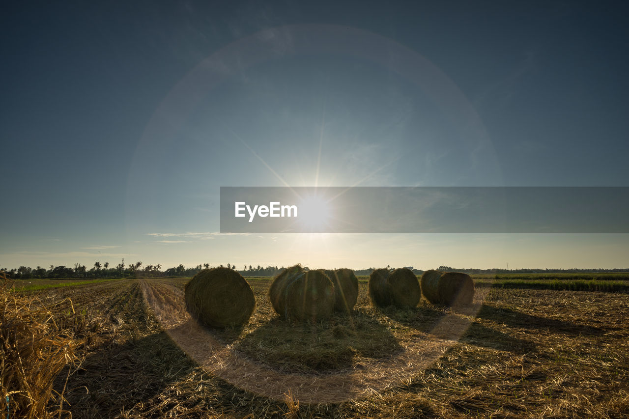 bale, hay bale, field, agriculture, tranquility, hay, sun, sunlight, landscape, no people, rural scene, sky, scenics, outdoors, beauty in nature, nature, day