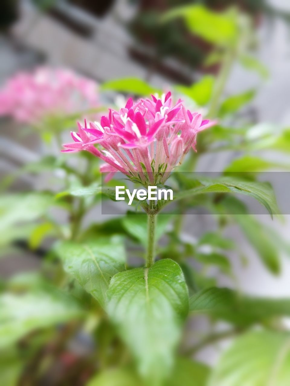 flower, nature, beauty in nature, fragility, plant, growth, pink color, petal, freshness, flower head, green color, leaf, day, no people, blooming, outdoors, close-up