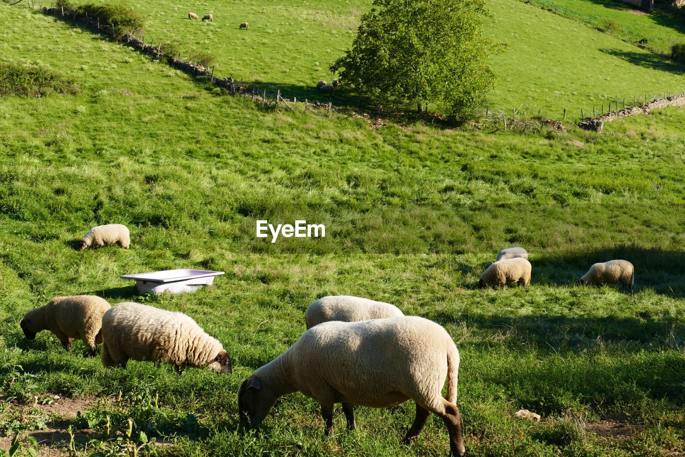 View of sheep in pasture