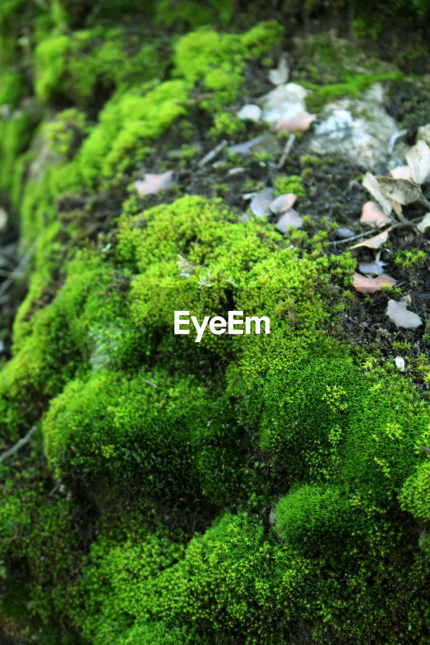green color, nature, moss, no people, day, outdoors, animal themes, growth, plant, close-up, animals in the wild, beauty in nature, freshness