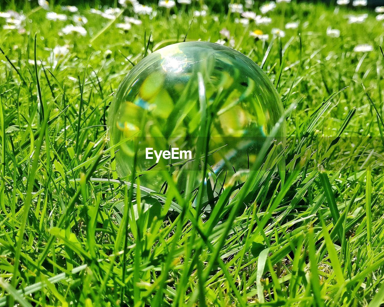 plant, green color, grass, growth, nature, close-up, field, no people, land, day, selective focus, outdoors, blade of grass, transparent, beauty in nature, glass - material, single object, drop, sphere, reflection, dew