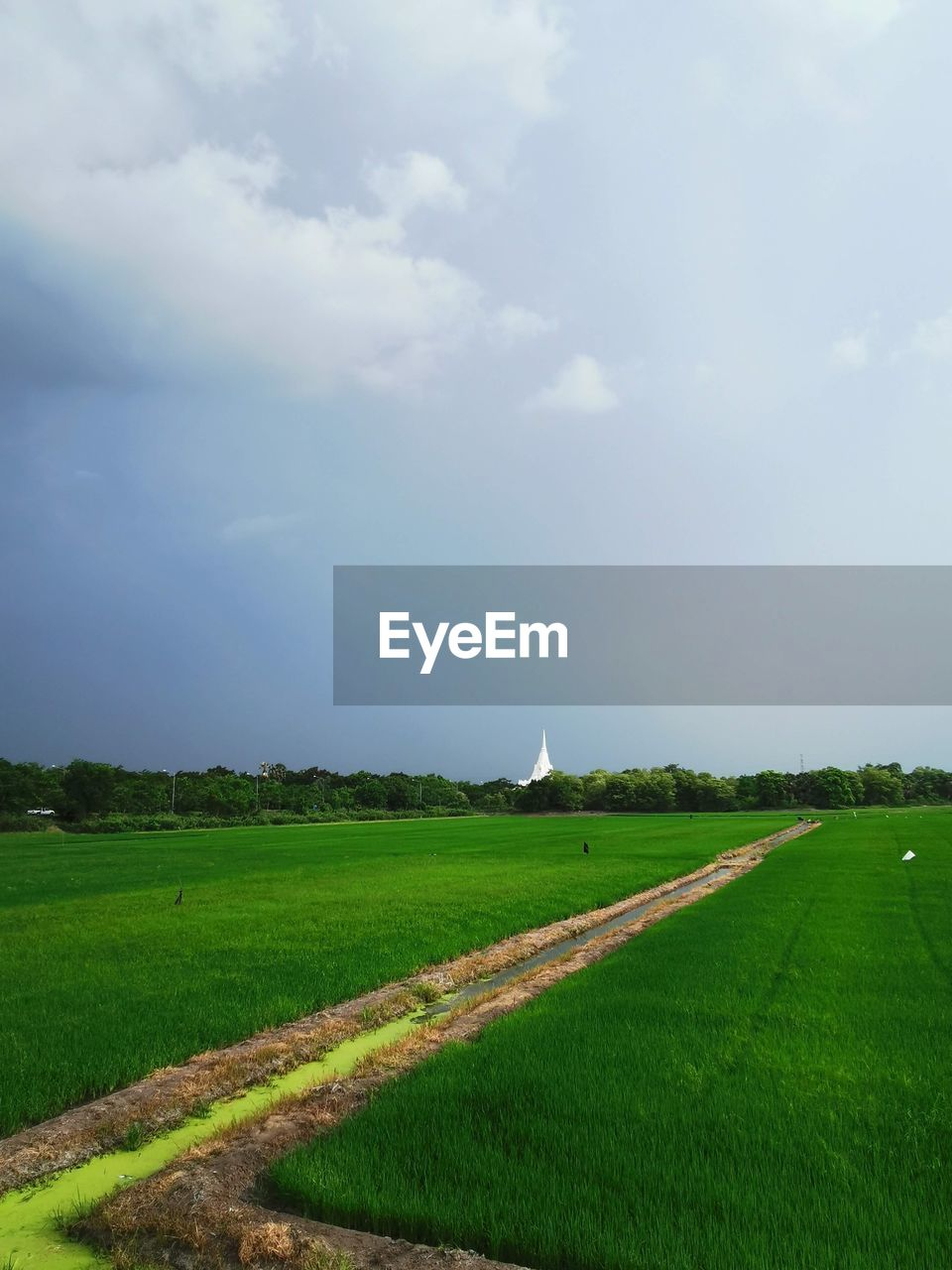 sky, landscape, field, land, environment, grass, plant, agriculture, rural scene, cloud - sky, beauty in nature, tranquil scene, nature, scenics - nature, tranquility, day, no people, road, growth, green color, outdoors