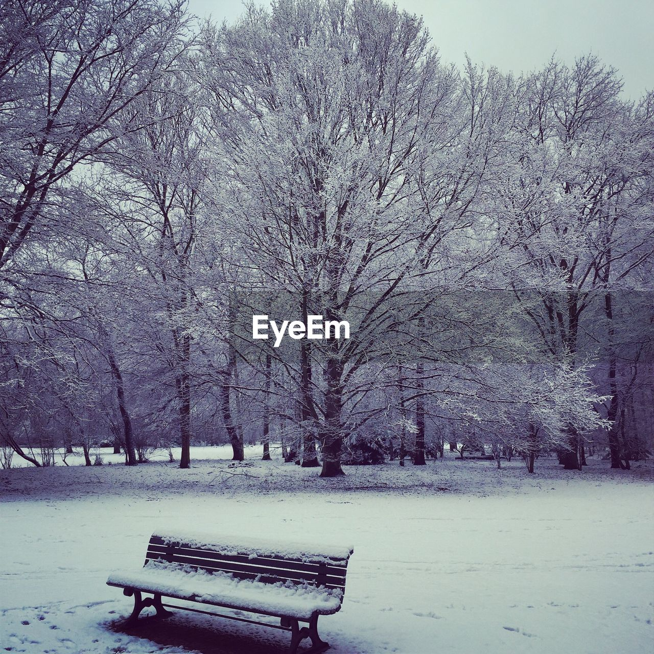 winter, snow, cold temperature, nature, bare tree, tree, beauty in nature, weather, tranquility, park - man made space, landscape, branch, outdoors, no people, day, scenics, sky, bleak