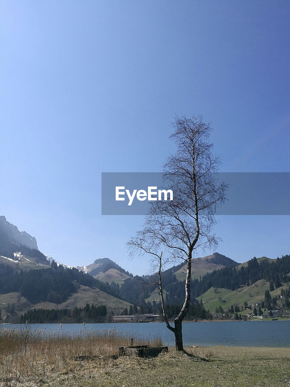 tranquility, tranquil scene, nature, mountain, beauty in nature, lake, scenics, landscape, tree, no people, water, outdoors, clear sky, day, bare tree, mountain range, blue, branch, sky