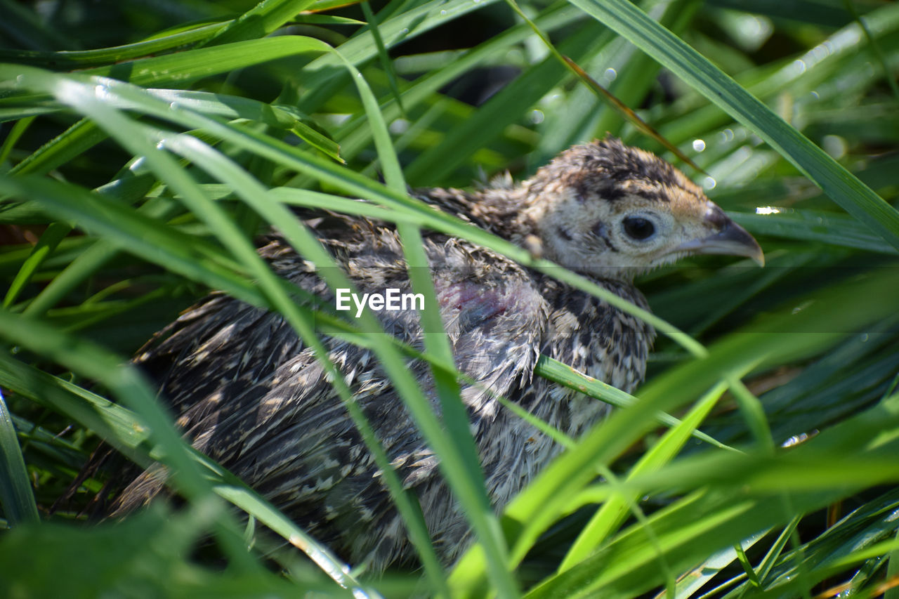 animal themes, animal, plant, vertebrate, one animal, animal wildlife, animals in the wild, green color, bird, selective focus, nature, no people, close-up, young bird, young animal, grass, day, leaf, growth, plant part, outdoors