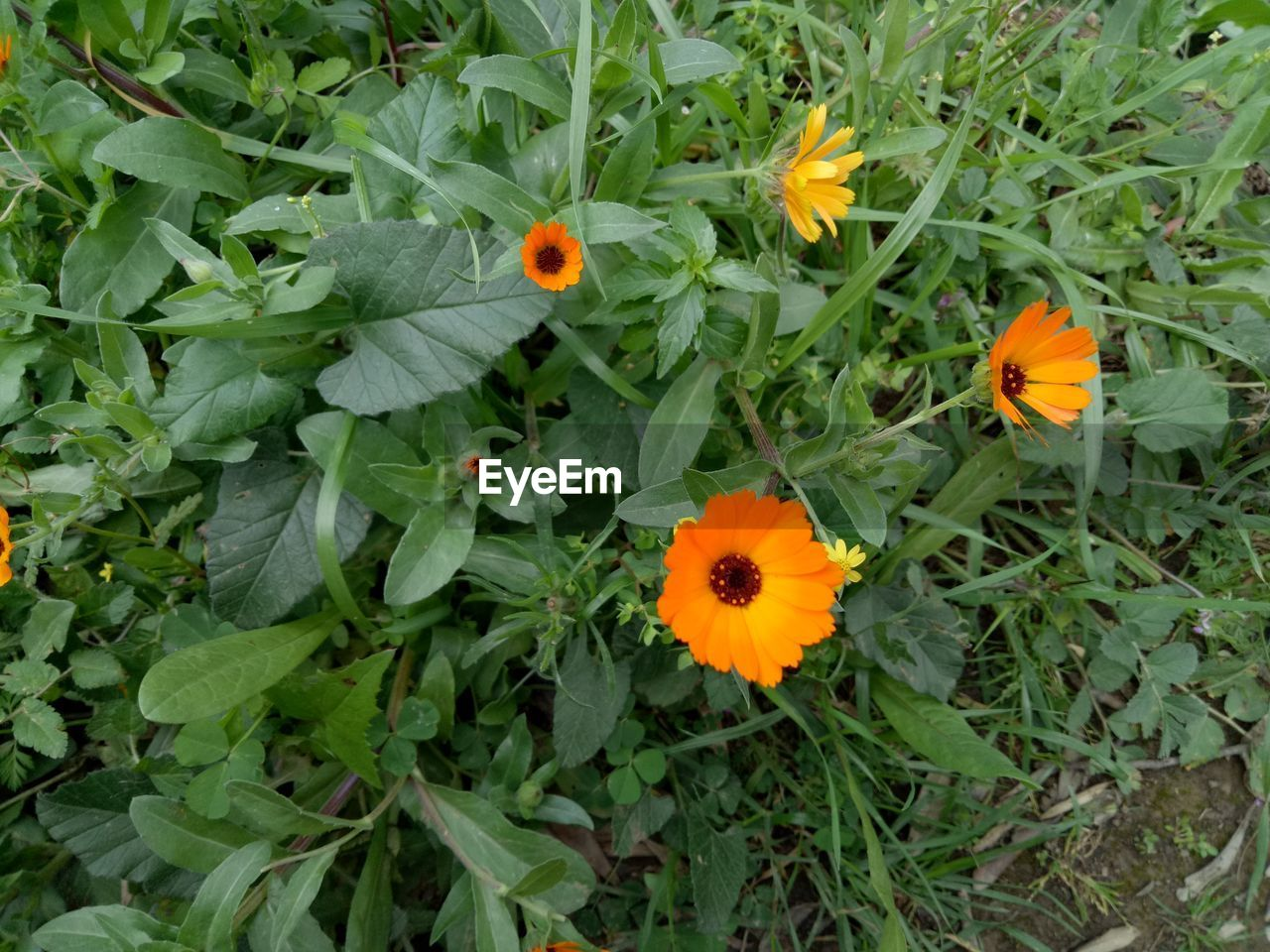 flower, growth, petal, orange color, flower head, high angle view, freshness, beauty in nature, fragility, green color, nature, plant, blooming, no people, outdoors, leaf, day, close-up