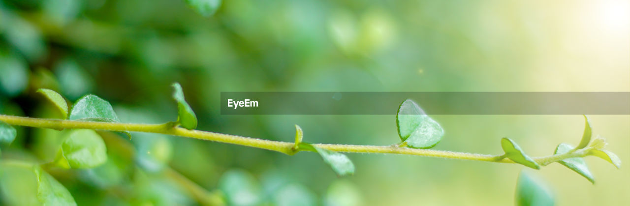 green color, growth, plant, nature, day, plant part, leaf, no people, close-up, beauty in nature, focus on foreground, selective focus, sunlight, outdoors, plant stem, fragility, tranquility, vulnerability, beginnings, freshness