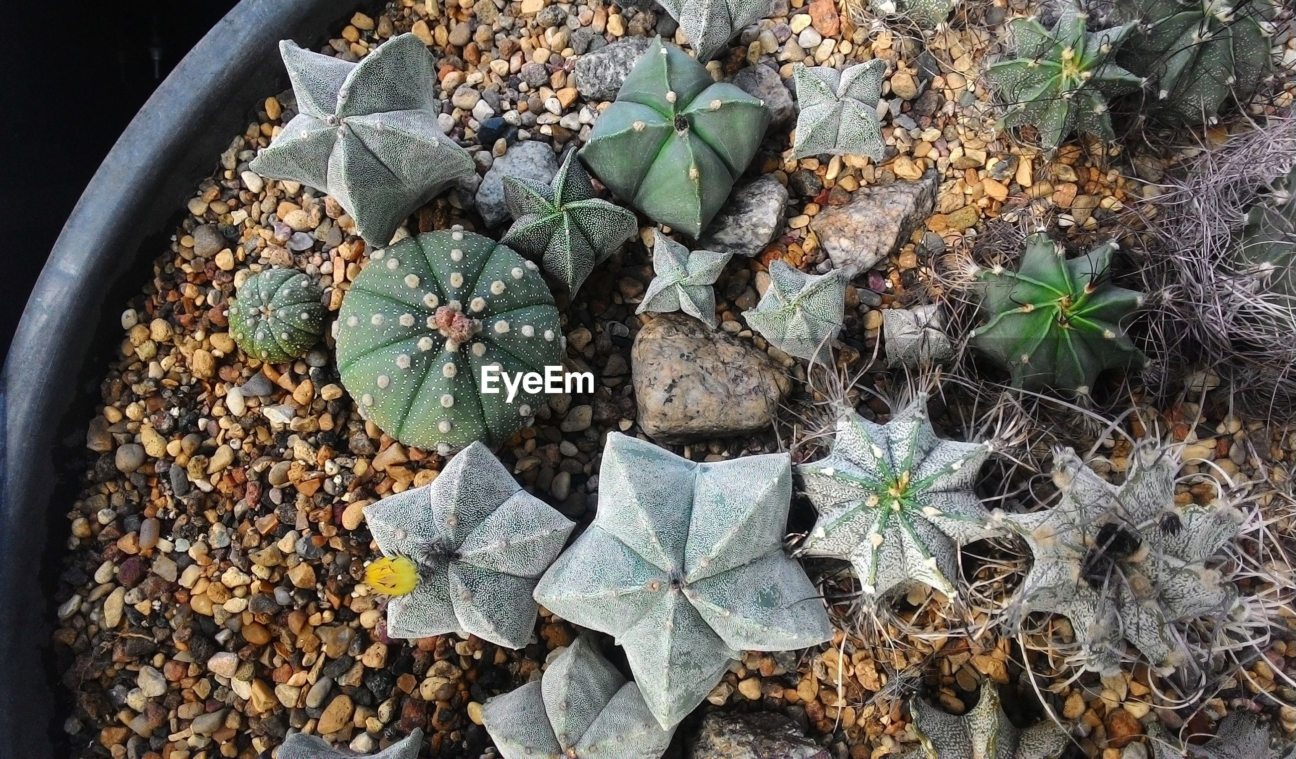 High angle view of potted plant sukkulents and cactuses