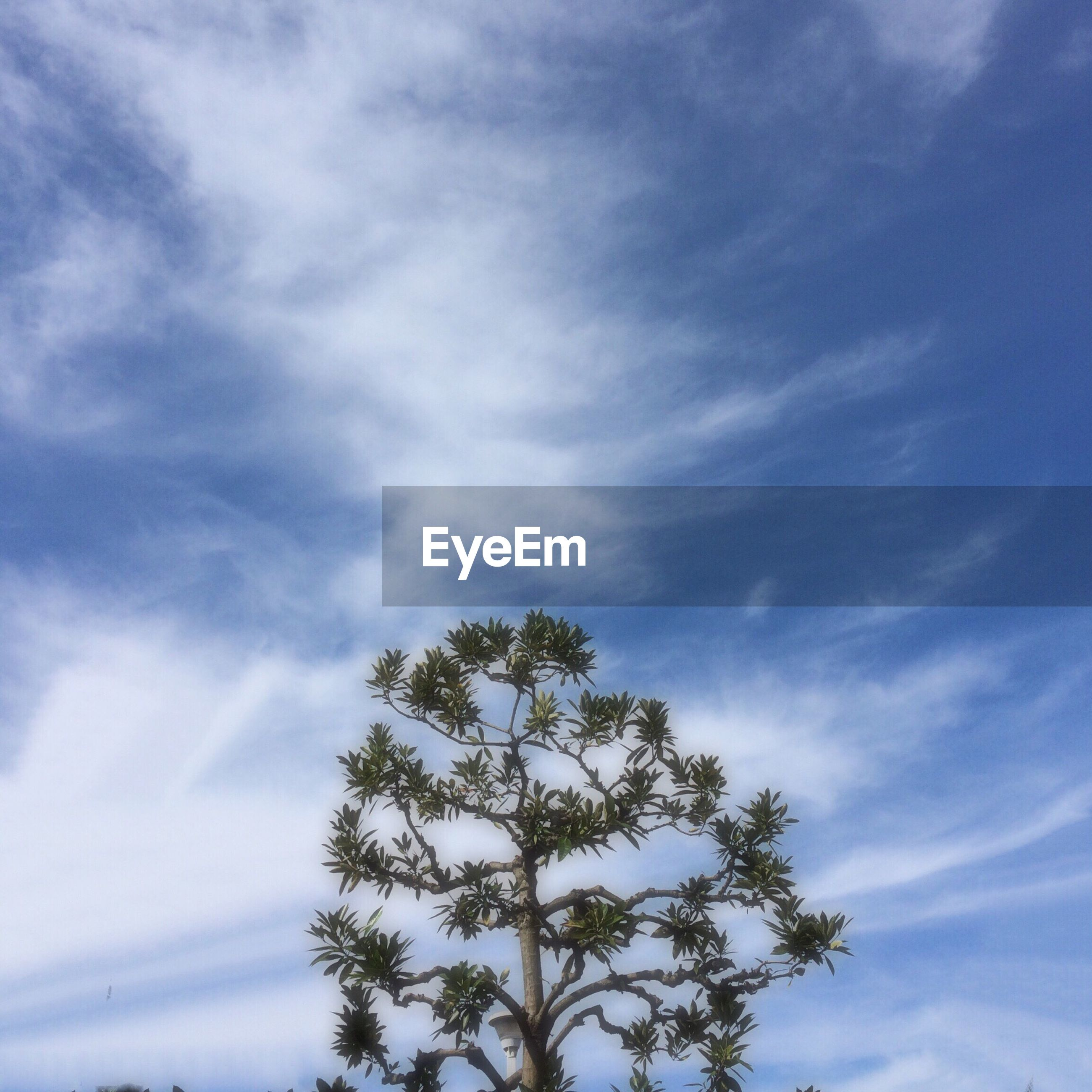 low angle view, sky, tree, cloud - sky, tranquility, beauty in nature, nature, growth, scenics, blue, tranquil scene, cloudy, cloud, branch, day, outdoors, no people, silhouette, high section, idyllic