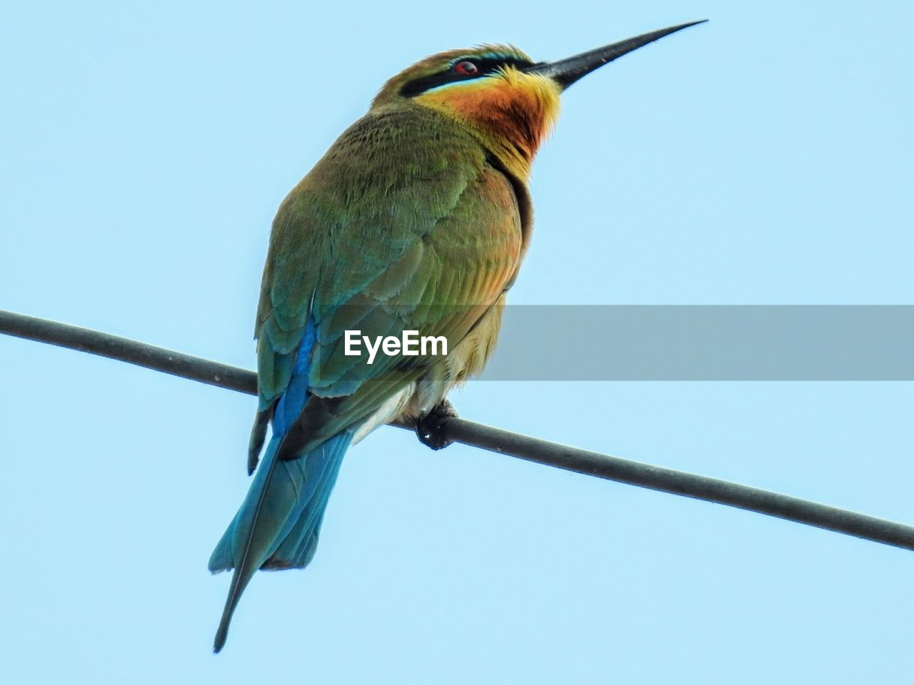 bird, one animal, animals in the wild, perching, animal themes, blue, clear sky, animal wildlife, kingfisher, cable, day, no people, outdoors, nature, close-up, sky