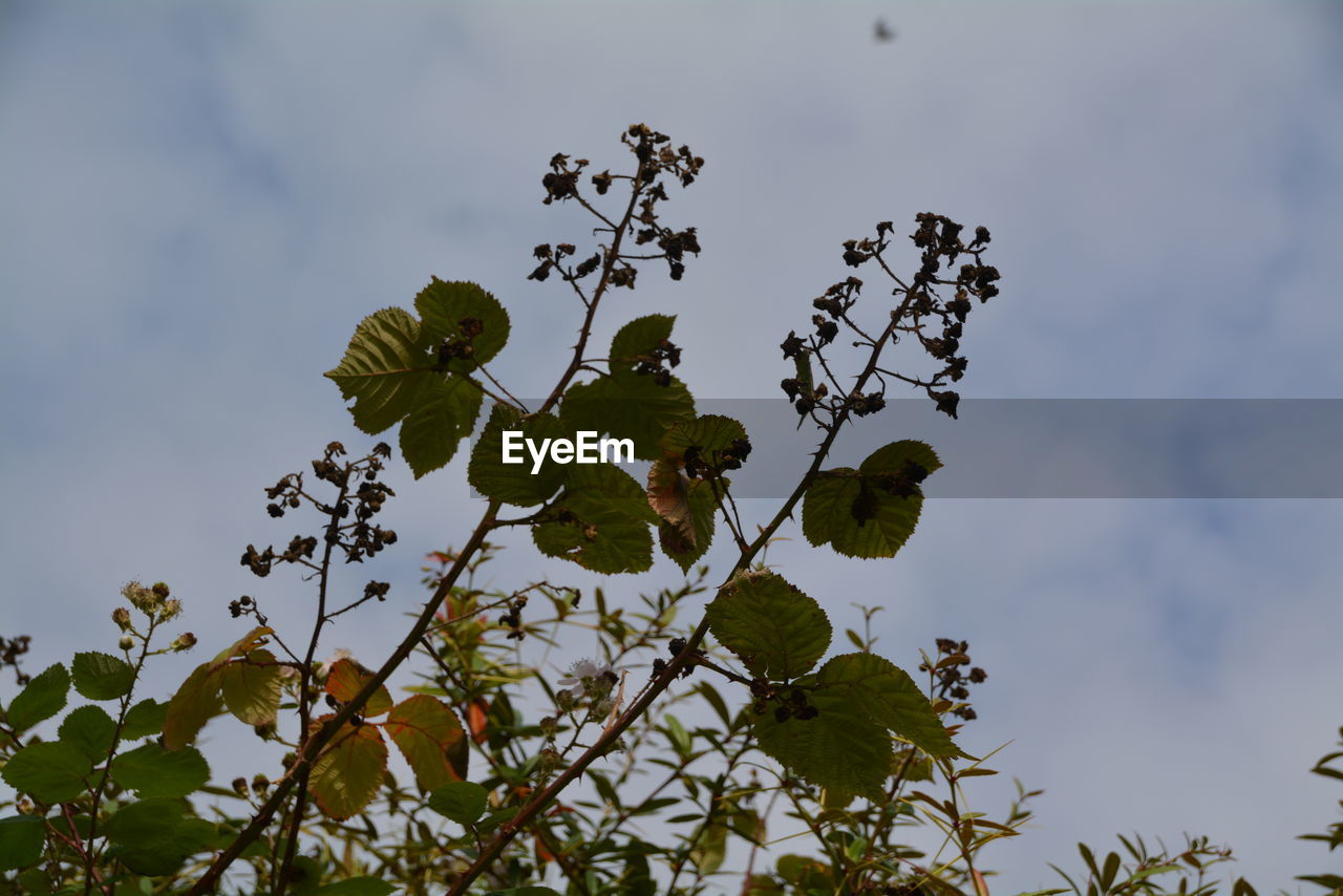 leaf, nature, low angle view, growth, day, no people, outdoors, plant, tree, green color, beauty in nature, sky, branch, close-up, freshness