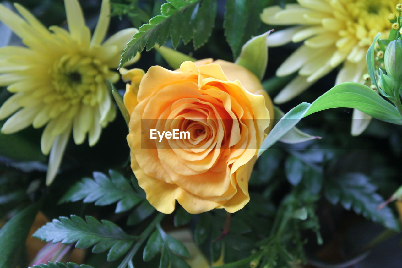 flower, petal, fragility, flower head, nature, growth, beauty in nature, plant, freshness, no people, close-up, leaf, blooming, green color, day, yellow, outdoors