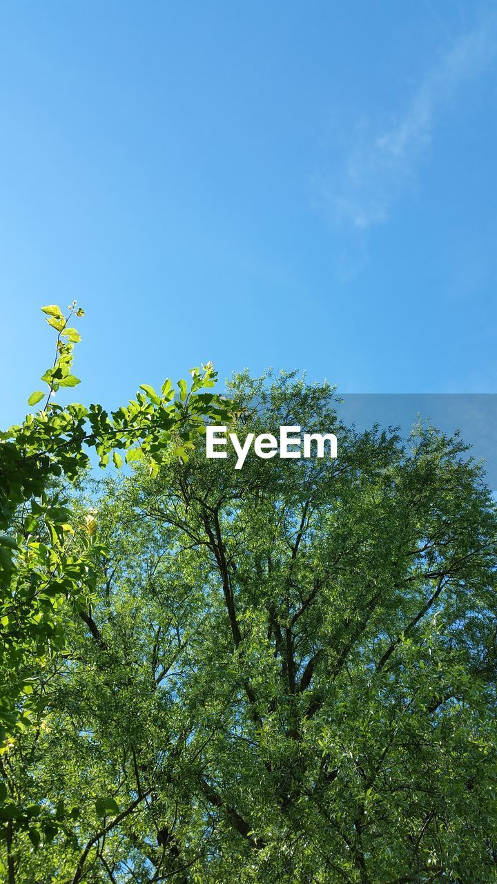 low angle view, nature, tree, growth, clear sky, day, no people, outdoors, beauty in nature, blue, sky, blue sky