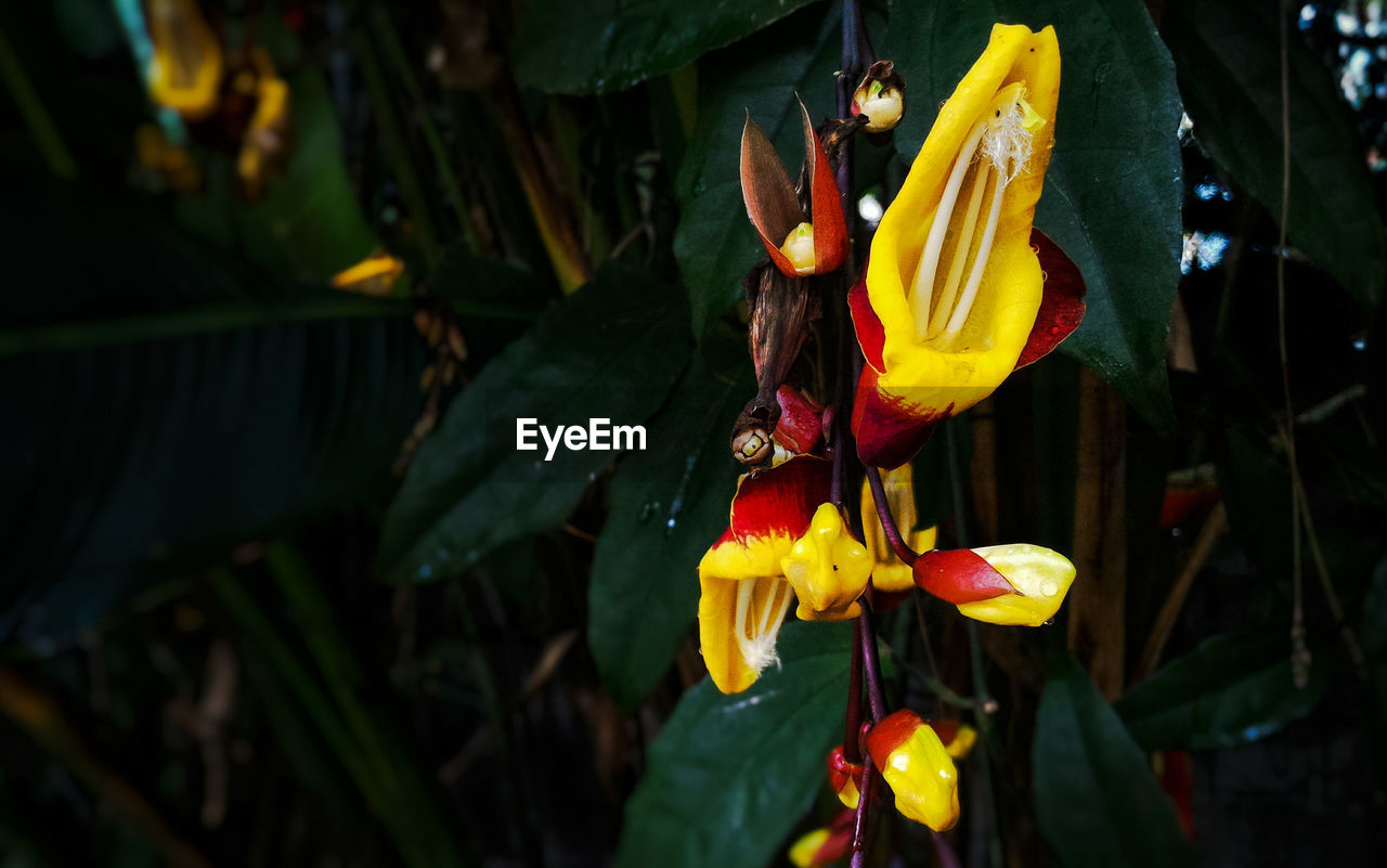flower, petal, fragility, beauty in nature, growth, nature, flower head, freshness, plant, outdoors, blooming, day, yellow, no people, leaf, close-up, day lily, animal themes