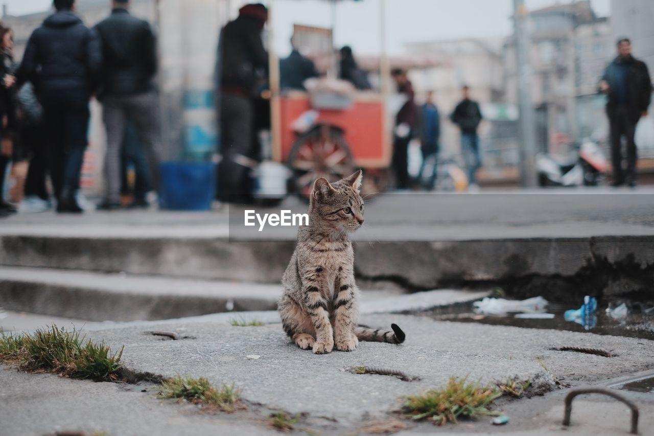 Cat sitting on street in city