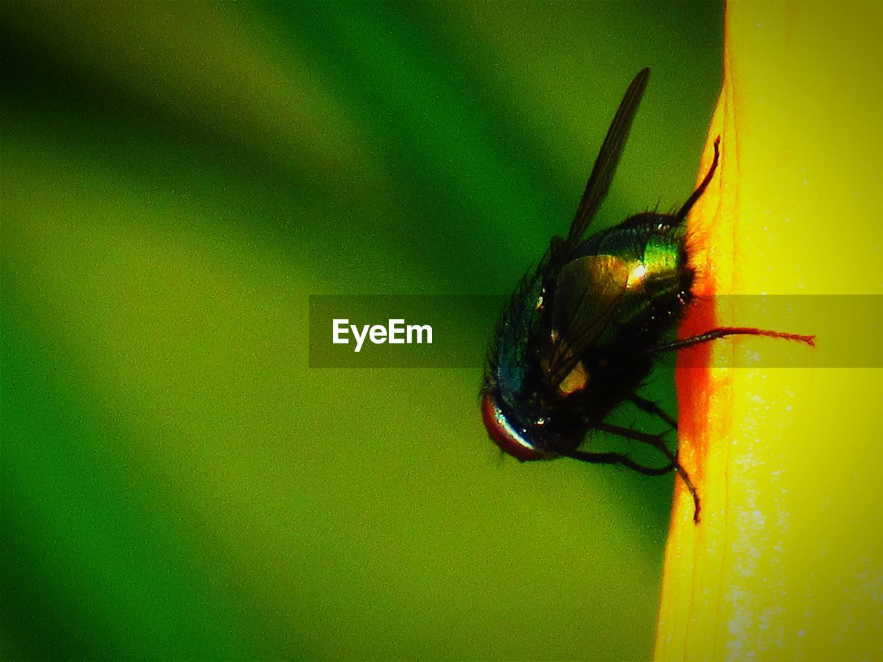 insect, animal themes, one animal, animals in the wild, no people, close-up, green color, nature, animal wildlife, outdoors, day