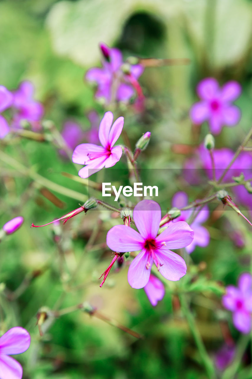 pink color, flower, fragility, growth, petal, beauty in nature, nature, focus on foreground, close-up, freshness, no people, day, plant, flower head, outdoors, blooming, tree