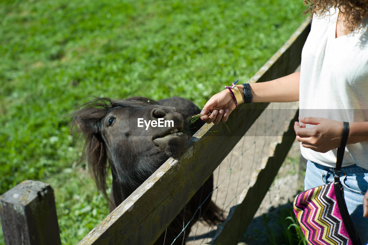 Midsection of woman feeding pony in pen