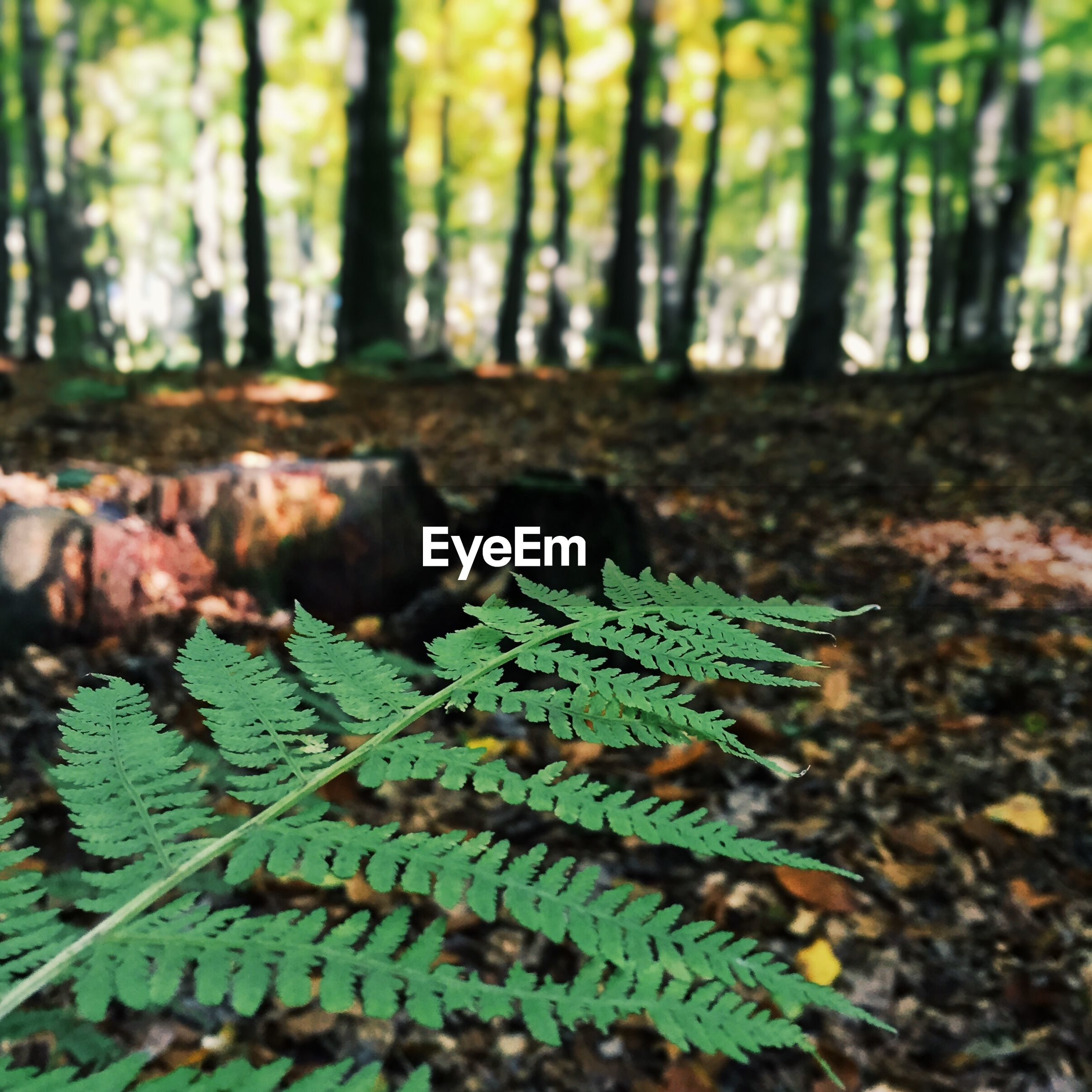 Close-up of plant in forest