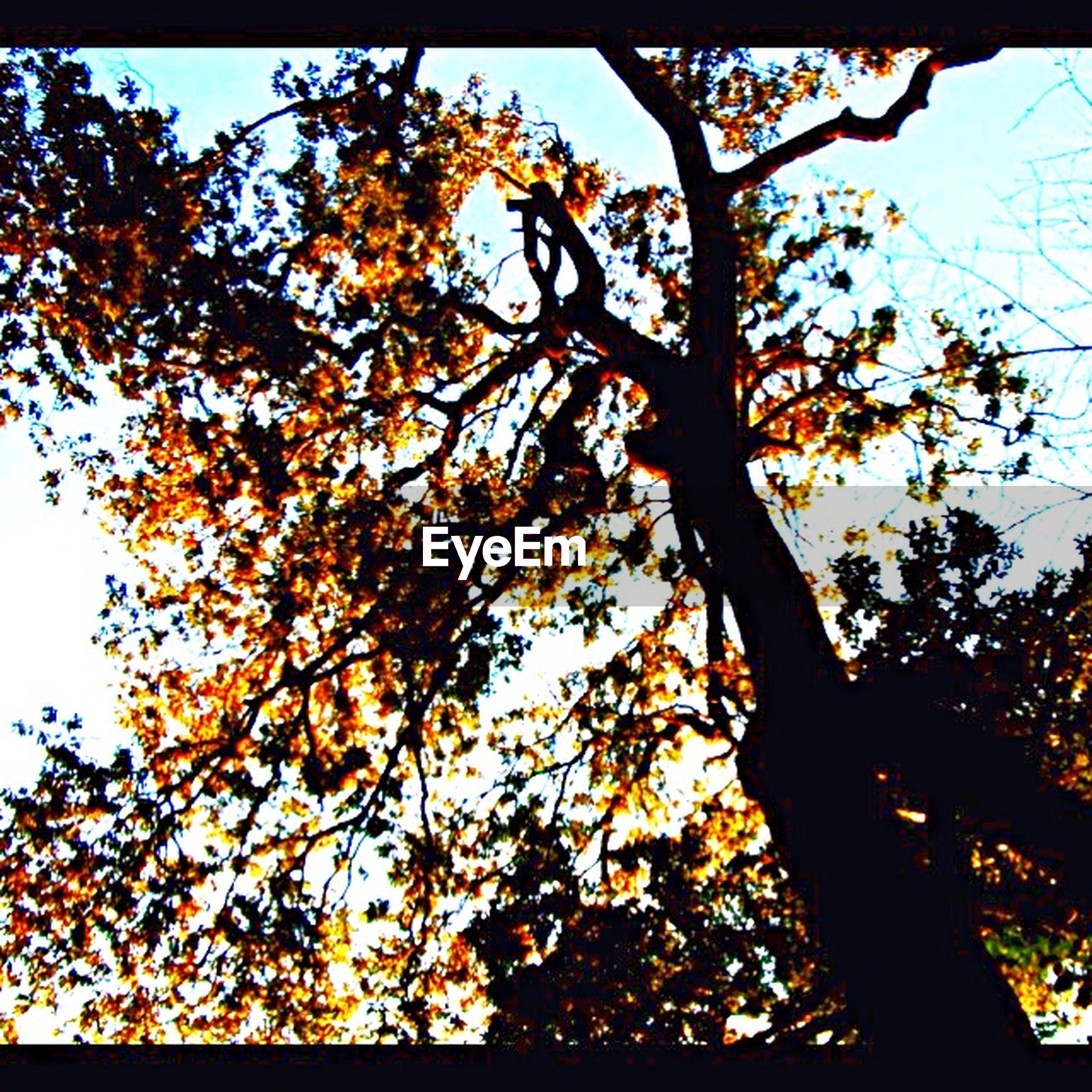 tree, low angle view, branch, autumn, growth, nature, change, sky, tranquility, beauty in nature, tree trunk, sunlight, orange color, clear sky, leaf, season, no people, outdoors, scenics, day