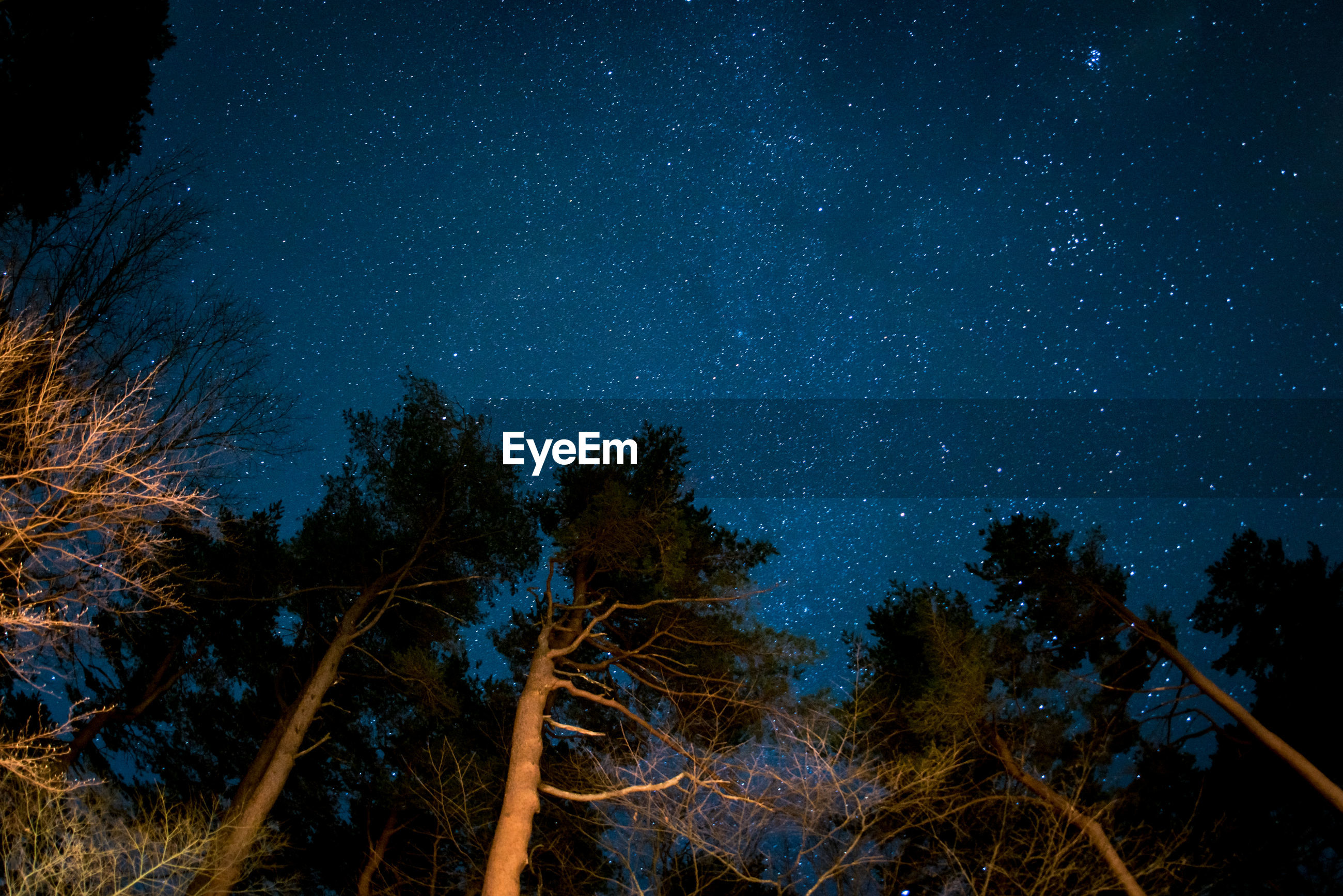 Low angle view of trees against constellation at night