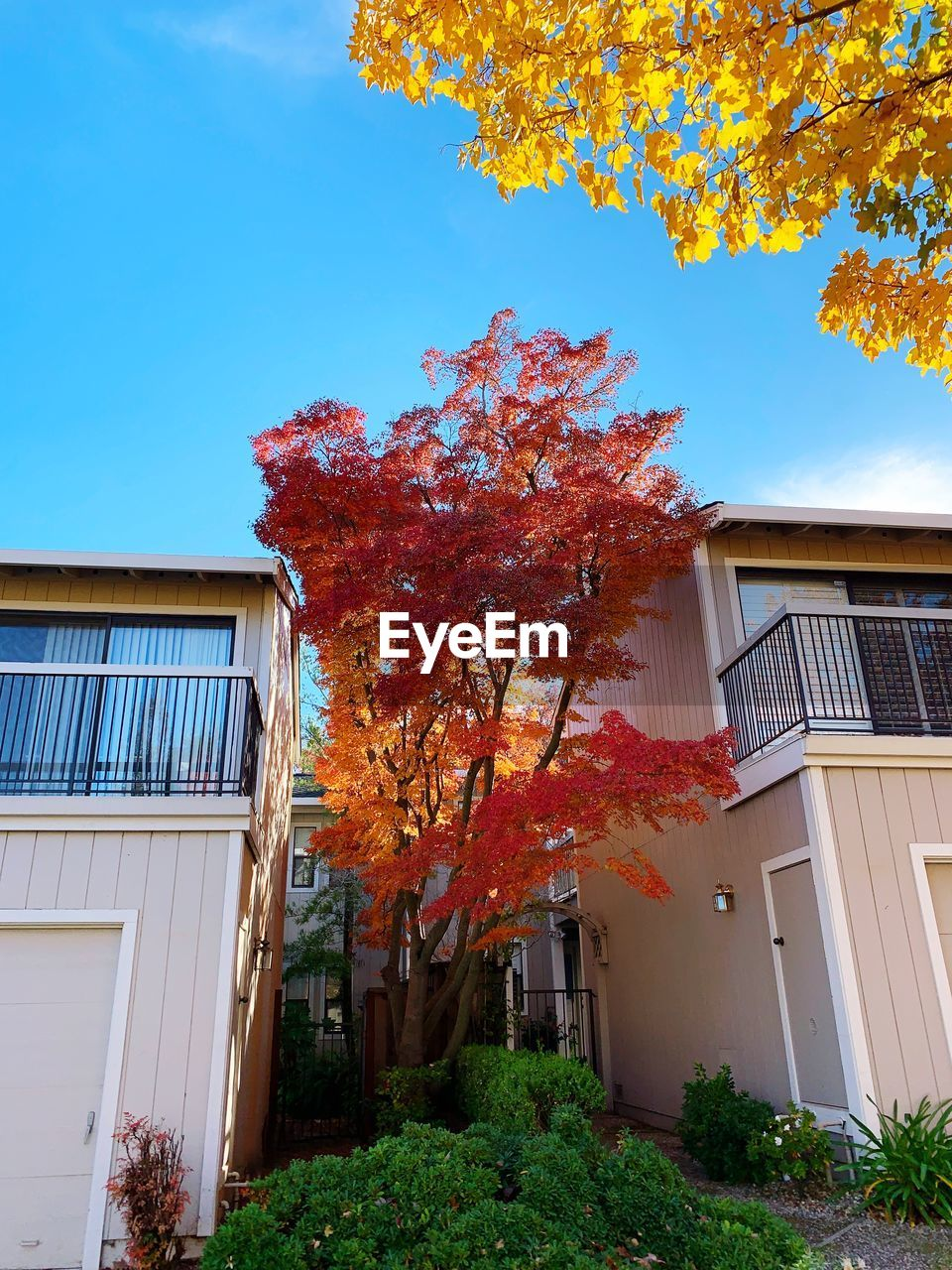 autumn, built structure, plant, building exterior, architecture, building, tree, change, nature, sky, orange color, growth, house, no people, outdoors, low angle view, leaf, day, plant part, residential district, fall