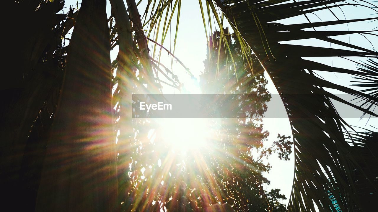 lens flare, sunbeam, sun, sunlight, low angle view, tree, day, no people, growth, outdoors, nature, clear sky, sky