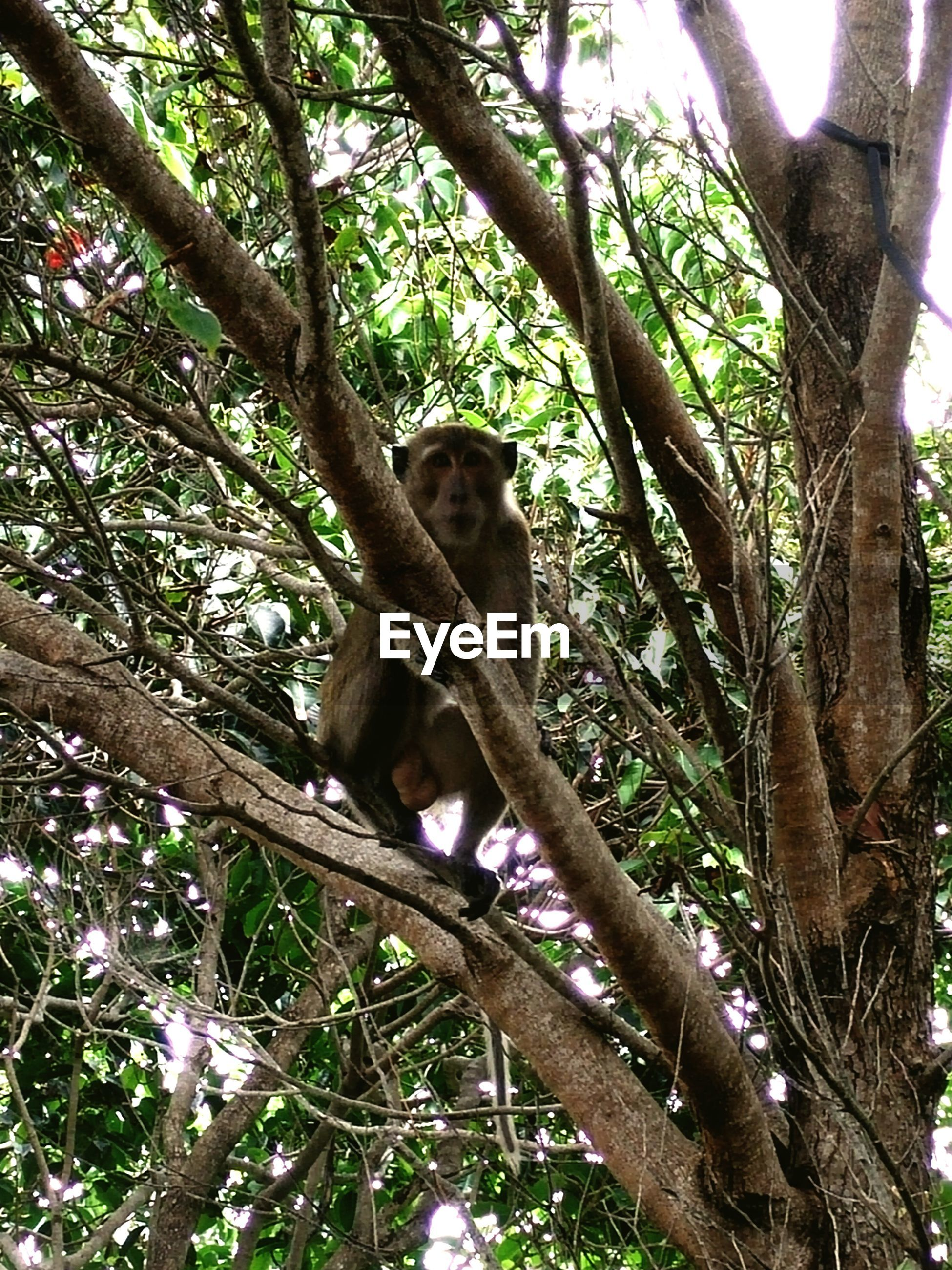 animal themes, tree, one animal, low angle view, mammal, animals in the wild, branch, wildlife, tree trunk, sitting, monkey, nature, zoo, growth, no people, day, outdoors, forest, sculpture, statue