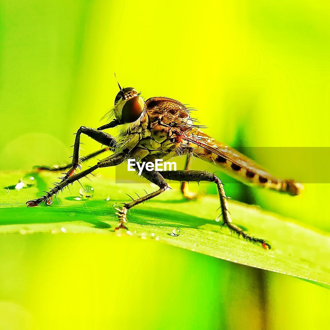 invertebrate, insect, animal themes, animal wildlife, animal, animals in the wild, one animal, green color, close-up, plant part, leaf, no people, plant, animal body part, zoology, selective focus, nature, animal leg, day, outdoors, animal wing, animal eye