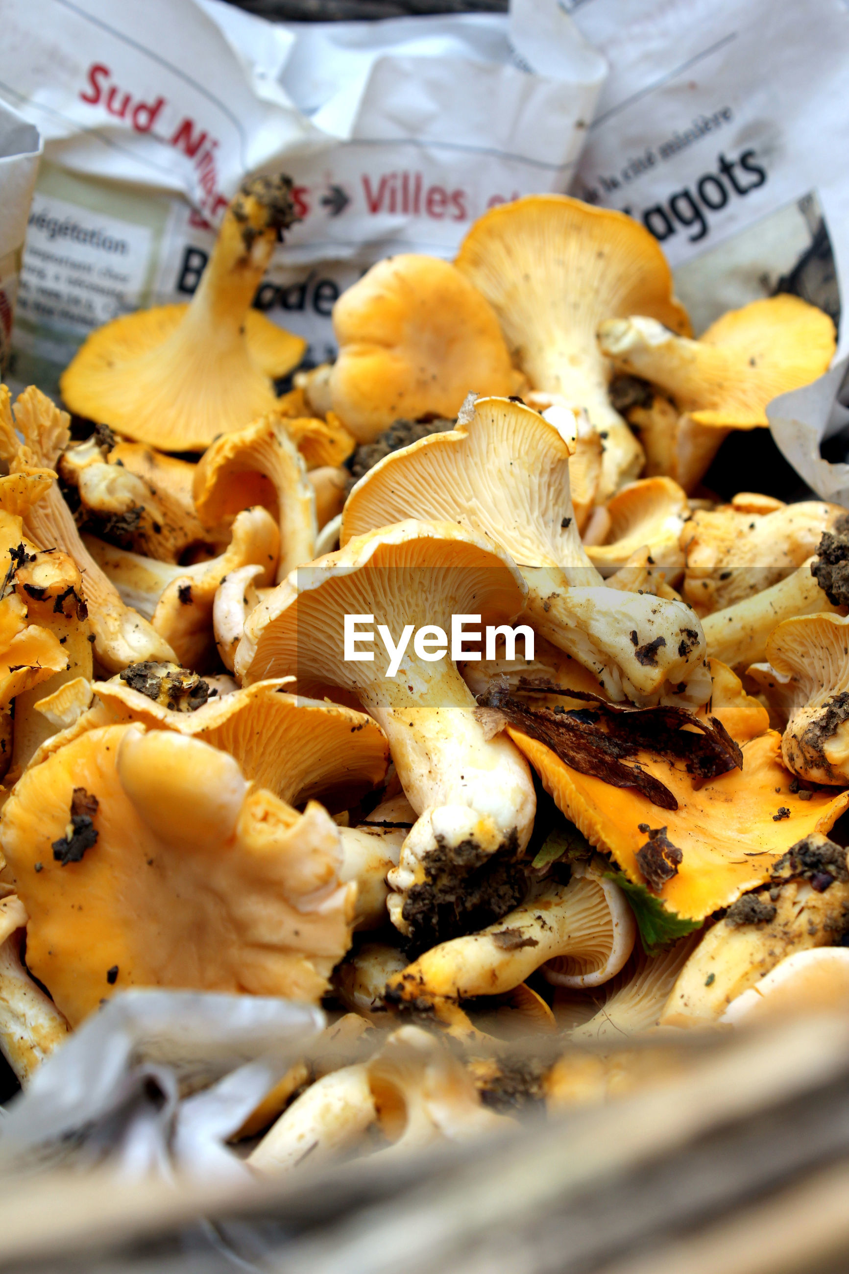 Close-up of mushrooms for sale in market